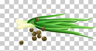 Vegetable Scallion Cartoon PNG