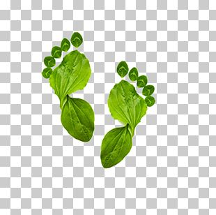 Ecological Footprint Environmentally Friendly Carbon Footprint Ecology PNG