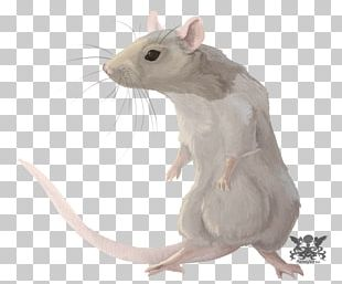 Rat Chinese Zodiac Astrological Sign Horoscope PNG