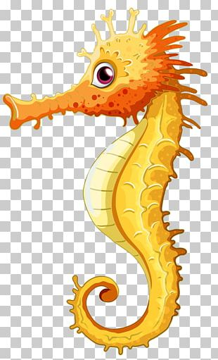 Seahorse PNG