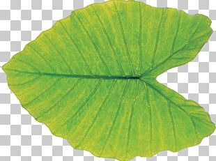 Leaf Green Plant Pathology PNG
