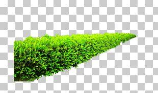 Shrub Garden Plant Height PNG