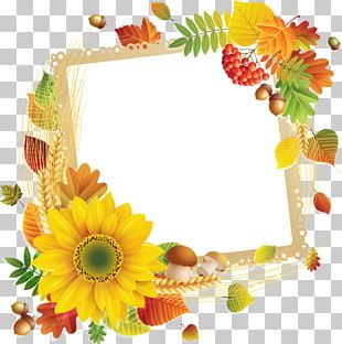 Floral Design Frames Flower Google PNG