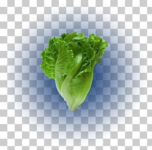 Romaine Lettuce Tener Un Perro Stock Photography Red Leaf Lettuce PNG