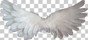 Angel Heaven PNG