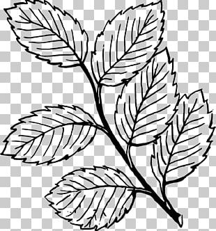 Look At Leaves Autumn Leaf Color Black And White PNG