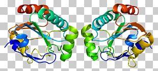 Homo Sapiens GPX7 GPX1 Glutathione Peroxidase Protein Data Bank PNG
