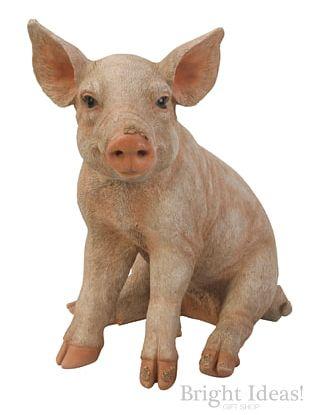 Large White Pig Miniature Pig Farm Animals: Pigs Pig Farming PNG
