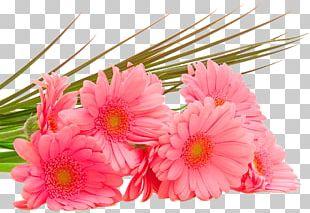 Flower Bouquet Desktop Display Resolution High-definition Television PNG