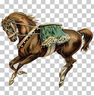 Horse Stallion Carousel Circus PNG