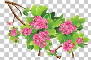 Spring PNG