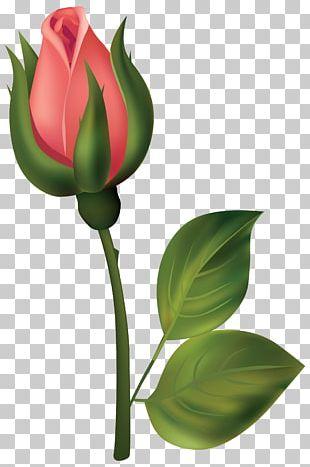 Bud Rose Flower PNG