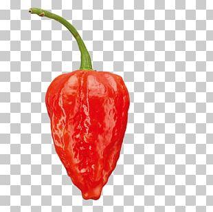 Habanero Tabasco Pepper Serrano Pepper Bird's Eye Chili Piquillo Pepper PNG