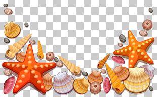 Seashell Starfish Beach PNG