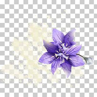 Purple Violet Floral PNG