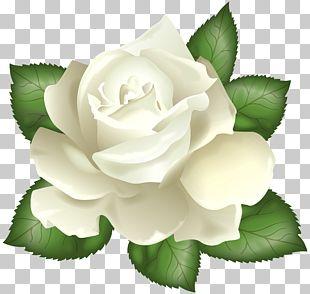 Rose White Flower PNG