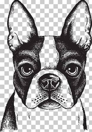 Boston Terrier French Bulldog Puppy PNG