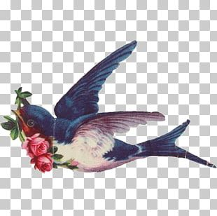Bird Barn Swallow Sparrow Crested Barbet PNG