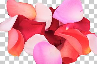 Petal Flower Rose Color PNG