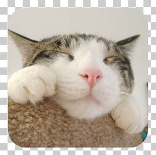 CATS: Crash Arena Turbo Stars Felidae Wildcat Desktop PNG