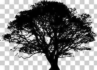 Silhouette Tree Oak PNG
