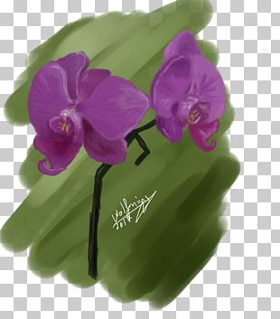 Violet Purple Lilac Magenta Moth Orchids PNG