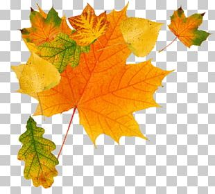 Autumn Leaves Green PNG