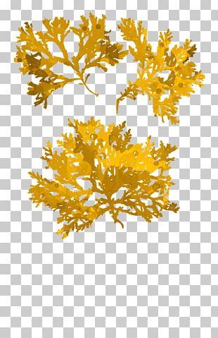 Yellow Seaweed Canvas Print Gold Art PNG
