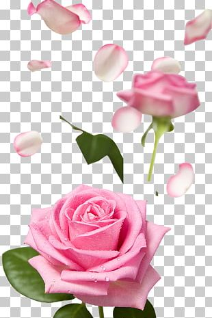 Pink Flower Rose Petal PNG