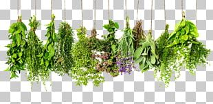Herb Spice Rosemary Thyme Ingredient PNG