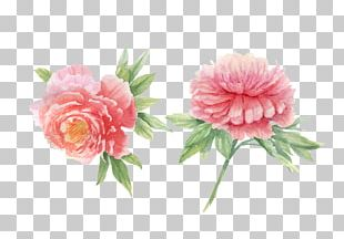 Peony Watercolor Painting PNG