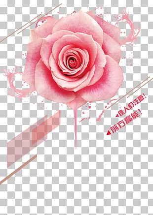Beach Rose Pink Color Cosmetics PNG