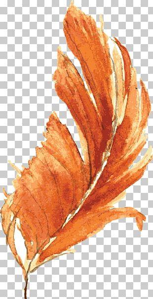 Orange Watercolor Painting Drawing PNG