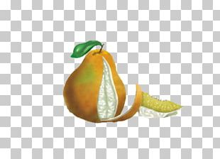 Tangelo Pomelo Grapefruit Clementine Orange PNG