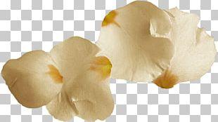 Petal Portable Network Graphics Flower Digital PNG