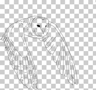 Bird Drawing Owl Line Art PNG