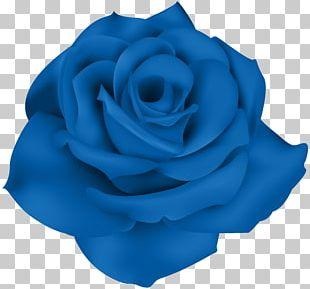 Blue Rose Portable Network Graphics Flower Garden Roses PNG
