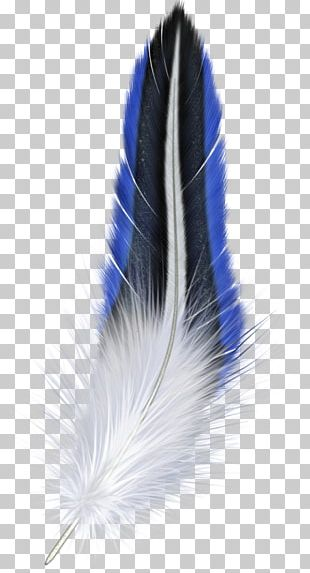 White Feather Bird PNG