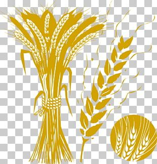 Decorative Brown Wheat Wheat PNG