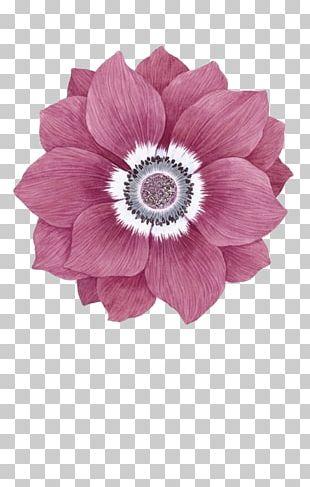Transvaal Daisy Floral Design Cut Flowers Blue Flower Petal PNG