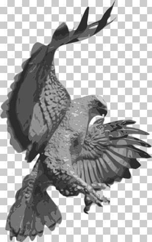 Hawk Portable Network Graphics Bald Eagle PNG