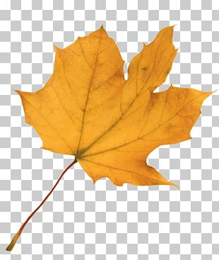 Autumn Leaf Color Red Maple Maple Leaf PNG