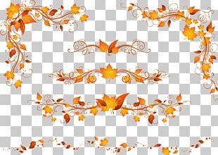 Autumn Leaf Color Autumn Leaf Color Maple Leaf PNG