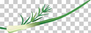 Allium Fistulosum Welsh Cuisine Grasses Leaf PNG