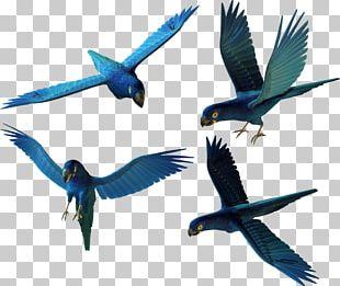 Bird Parrot Parrot PNG