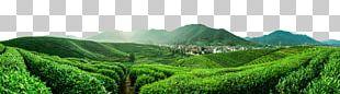 Jiangsu Furong Tea Plantation Yum Cha Da Hong Pao Tieguanyin PNG