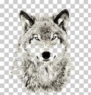 Gray Wolf Sheep Sleep Lone Wolf Puppy PNG