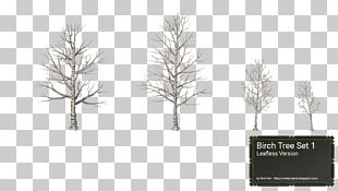 Pine Family Tree Birch Winter Snow PNG