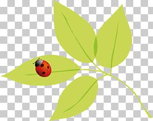 Insect Autumn Spring Summer PNG