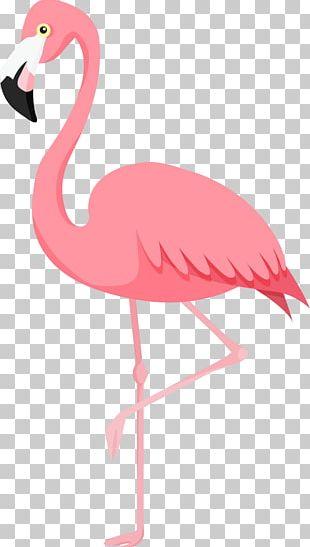 Flamingos Bird PNG